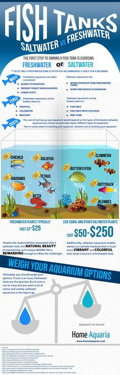 http://homeaquaria.com/infographic-saltwater-vs-freshwater-tanks/  [Infographic] Saltwater vs Freshwater Tanks