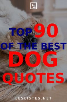 Dogs are known as man's best friend. With that in mind, check out the top 90 dog quotes you should know and memorize. #dog People Quotes, Me Quotes, Best Dog Quotes, John Grogan, Meaning Of Love, Nature Quotes, Feeling Sad, Cute Animal Pictures, Love You More Than