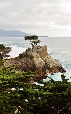 Lone Cypress, Carmel.  Looks just like the picture.  Go there!