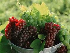 grapevine images - Bing Images