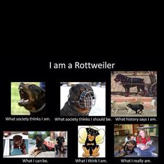 What a Rottweiler thinks about itself.