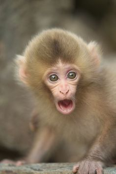 Baby opens his mouth wide by Masashi Mochida on 500px