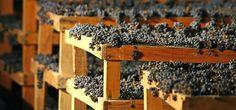 I vitigni dell'Amarone sono autoctoni: in percentuale maggiore è la Corvina, che dona il colore carico e la struttura seguono la Rondinella e la Molinara. I profumi sono complessi. Viole, frutti di bosco, cannella, chiodi di garofano e cacao. Erbe aromatiche come rosmarino e salvia.
