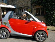 A dog driving a Smar