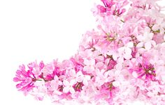 Pink and White Flowers | Pink (Color) Pink flowers