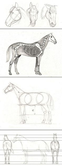 How to draw a horse: