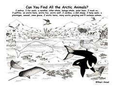 exploring nature educational resource arctic animals hidden picture animal coloring pagescoloring - Arctic Colouring Pages