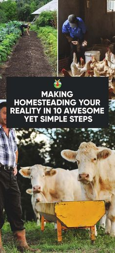 Have you always had a dream to homestead but always had excuses not to take action? With these simple 10 steps to making homesteading your reality, you will better understand how to live your dream, with no fear!