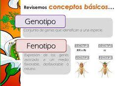 Resultado de imagen para fenotipo dominante definicion