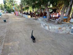 Black cat in Gümüslük, Turkey #cats #Turkey