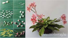 Lewisia cotyledon (Változékony dohánygyökér) - My clay flower https://www.facebook.com/Csodavirag