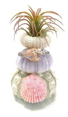 Hey, I found this really awesome Etsy listing at https://www.etsy.com/listing/292457977/triple-sea-urchin-air-plant-planter-air