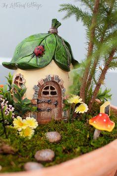 Container Fairy Garden | Mushroom | Moss
