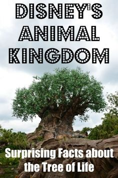 We know you've seen the Tree of Life before at Disney's Animal Kingdom, but we bet you didn't know all these fun facts about it!