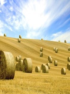 Hay Field Wallpaper