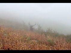 Calling Elk through the Fog    Hushin with LaVere   some wise words shared in this video. It's important to keep an open mind