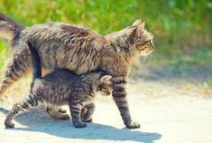 10 adorables chatons qui imitent leurs parents
