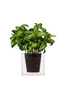 bosske cube clear / smart (or lazy) gardening