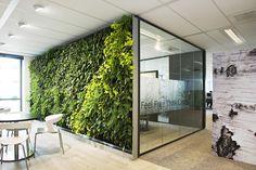 Een scheidingwand van planten: IM Plantenwand van Intermontage