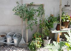Pop quiz: which is more polluted, indoor air or outdoor air? 10 times out of indoor air in your house, office or apartment is going to be worse. Here are some house plants that clean air and are nearly impossible to kill Hydroponic Gardening, Container Gardening, Indoor Gardening, Organic Gardening, Garden Plants, Indoor Plants, Air Plants, Potted Plants, Plantas Indoor