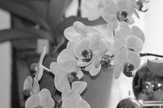 Min egen smukke orkide