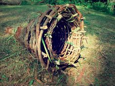 How to Make a Primitive Funnel Fish Trap That Keeps on Giving