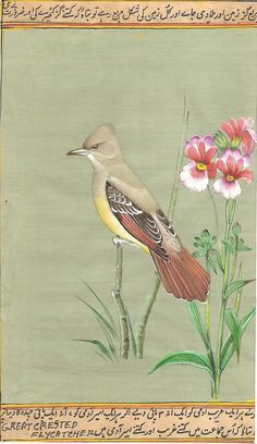 Indian Miniature Nature Painting Great Crested Flycatcher Handmade Bird Art