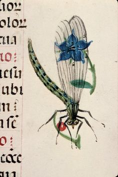 A dragonfly inhabiting the margins of this Book of Hours created in Bruges, Flanders, circa 1510. Rouen, Bibliothèque Municipale, Ms. 3028, fol. 115v.