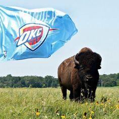 OKC Thunder flag and a buffalo - I love my state!