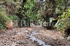 Tras intervención militar Farallones de Cali dan señas de recuperación - El Pais - Cali Colombia