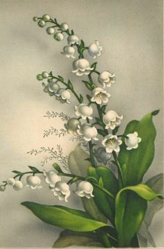Vintage-Postcard-Early-flowers-postcard-Muguet-Porte-Bonheur( in every corner of our memories are windows of light . Step in it for a minute and know You are Blessed ❤ :) Art Floral, Vintage Pictures, Vintage Images, Botanical Illustration, Botanical Prints, Vintage Cards, Vintage Postcards, Vintage Flowers, Vintage Floral