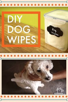 Make your own dog bath wipes in MINUTES! Choose from deodorizing or moisturizing ingredients to get exactly what your pooch needs. You'll have a fresh pooch in only a few steps.