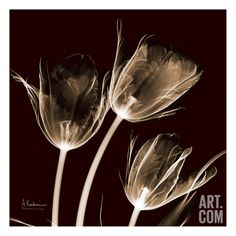 Tulips Trio on Brick Art Print by Albert Koetsier at Art.com - #AlbertKoetsier #Photo #Rx #Flower