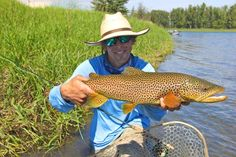 Dave Brown Outfitters has been guiding on The Bow River and other area waters since 1988 Dave Brown, Big Brown, Trout Fishing Tips, Fishing Guide, Fishing Poles, Fishing Girls, Sport Fishing, Brown Trout, Western Canada