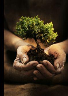 Be a Tree Hugger!