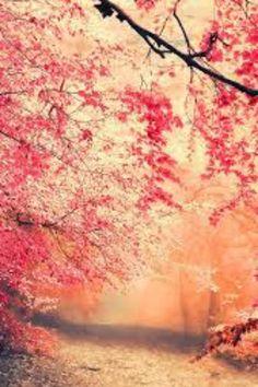 Natur Wallpaper, Wallpaper Wa, Wallpaper Backgrounds, Black Wallpaper, Nature Hd, Nature Tree, Nature Images, Green Nature Wallpaper, Beautiful Nature Wallpaper