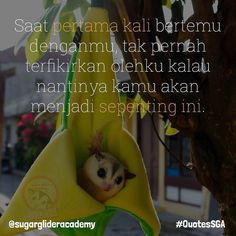 When the first time we met i never think that you'll be this important to me. . Order Produk SGA? WA : 087739151147 BBM : 7650E8FB Line : sugarglideracademy . #sugarglider #sugarglideracademy #sugarglideronlineshop #sugargliderindonesia #sugarglidermalay #sugargliderthailand  #jualsugarglider #フクロモモンガ #sugargliderindonesia #sugargliderjakarta #sugargliderofinstagram #exoticpet #indoexoticpets #kpsgi  #kpsgijakarta #sugargliderslover #gembiraloka #safariprigen #glzoo #tamansafariindonesia…