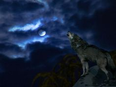 Wolves Of The Beyond Site   wolf moon Wolf Moon