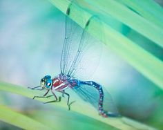 "Nature Photography Art Print ""Dragonfly"" from Rocky Top Studio"