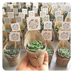 Bahar gibi gelen Gizem&Tuğberk çiftinin sukuları🌿Sevgi her şeye yeter💫… The mysteries of Gizem & Tugberk couple who come like spring🌿 Love is enough💫💫 # sukulent - Succulent Wedding Favors, Diy Wedding Flowers, Wedding Favours, Wedding Gifts, Succulent Gifts, Wedding Ideas, Bridal Shower Decorations, Wedding Decorations, Decoration Party