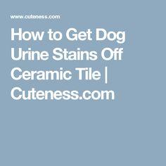 How to Get Dog Urine Stains Off Ceramic Tile   Cuteness.com