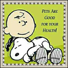 ideas for dogs funny quotes thoughts life art breeds cutest funny training bilder lustig welpen Charlie Brown Quotes, Charlie Brown Und Snoopy, Peanuts Quotes, Snoopy Quotes, Funny Cartoon Quotes, Funny Cartoons, Funny Sayings, Disney Sayings, Peanuts Cartoon