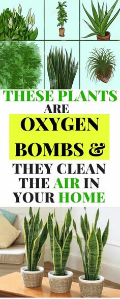 Plants are great for removing carbon dioxide from the air but some plants are even more powerful than that and can do a great job improving the air quality in your home. Plus they look great and carry a great energy.