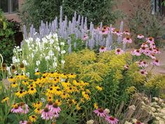 Summer Dreams is a pre-planned garden that thrives on little water once established...black-eyed Susan, cone flower, goldenrod and more.