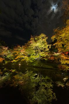 Reflection of lit-up trees, Japan