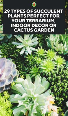 29 Types of Succulent Plants for Your Terrarium, Indoor Decor, or Cactus Garden is part of garden Decoration Indoor Are you keen on doing something new and different in your garden or home Then why - Garden Cactus, Cactus House Plants, Cactus Terrarium, Succulent Gardening, Hydroponic Gardening, Cactus Flower, Water Garden, Planting Succulents, Garden Plants