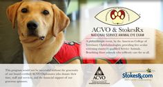 Service Dog Eye Exams (website)