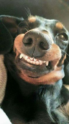 ⭐Doxie says CHEESE!!⭐                                                       …