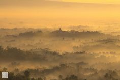 Goldy Morning by Muhammad Islam Alwi on 500px
