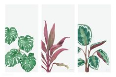 Collection of hand drawn plants isolated on white background | premium image by rawpixel.com Outdoor Pouf, Watercolor Plants, Tropical Design, Nature Images, Free Illustrations, Green Plants, Pattern Wallpaper, Wallpaper Backgrounds, Hand Drawn